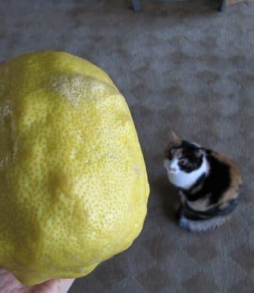Lemony Lentil Stew