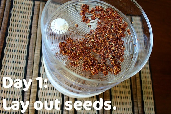 how to clean up cottonwood seeds