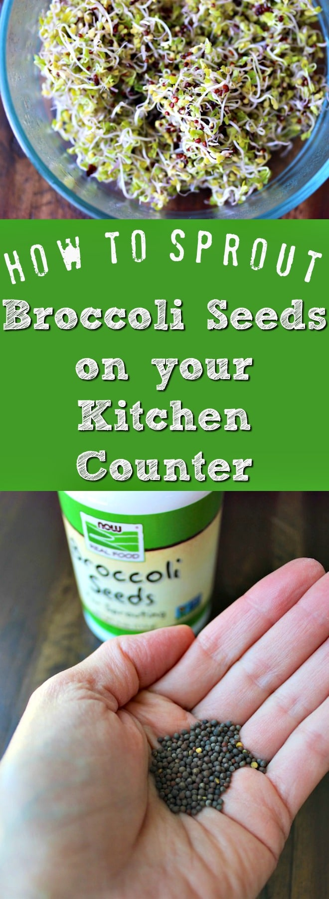 How to Grow Broccoli Sprouts in Your Kitchen. No green thumb required!
