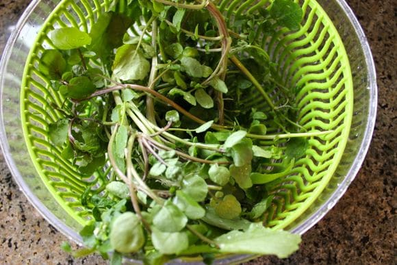 Watercress from the farmers' market.
