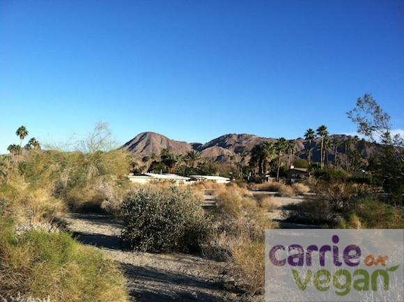 Desertscape.