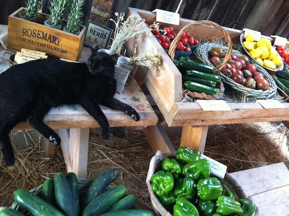 Shadow protecting the vegetables.