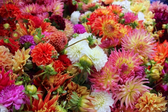Dahlias at the farmers' market
