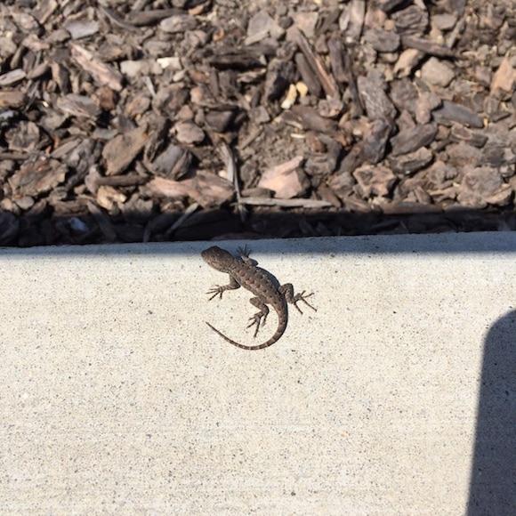 Baby lizard | www.cleaneatingkitchen.com
