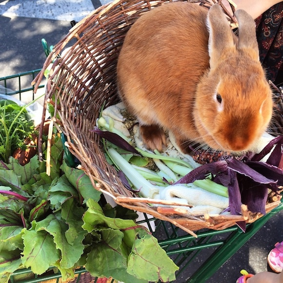 Bicycle bunny from the SLO Farmers' Market | www.cleaneatingkitchen.com