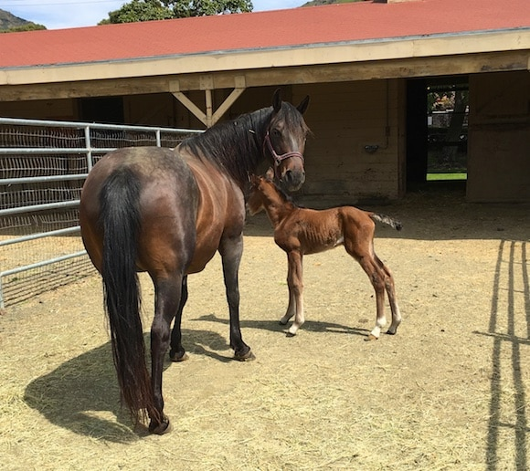 Baby horse and mom