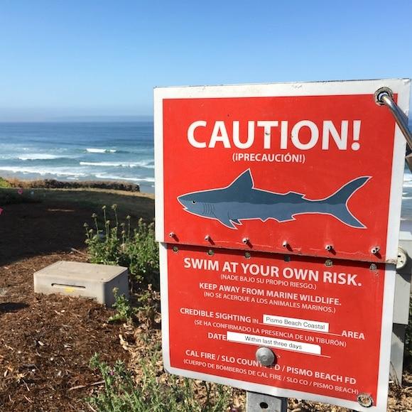 Shark sighting in Pismo Beach
