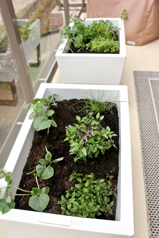 How To Grow A Self Watering Patio Summer Garden Giveaway Clean