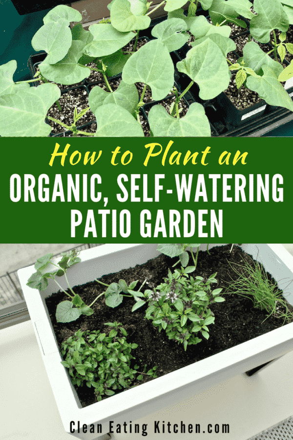 How to Plant an Organic, Self-Watering Patio Garden