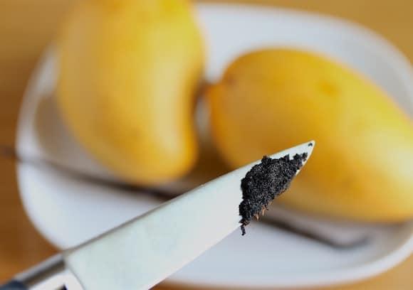 vanilla pod seeds