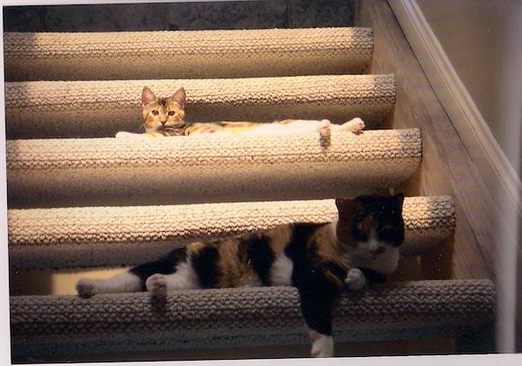 Xena Roxy stairs