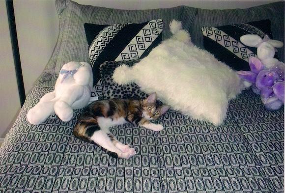 Xena kitten bed