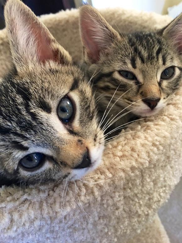 Dash and Dottie