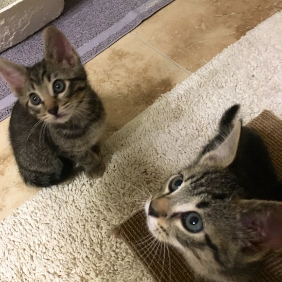 Kittens adorable