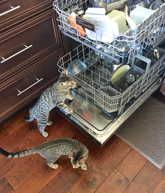 kitten dishwasher