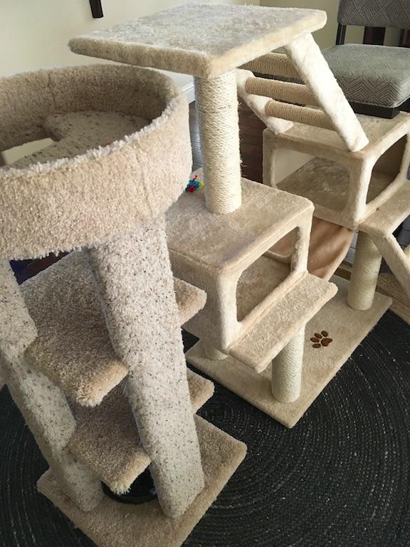 kitten jungle gym