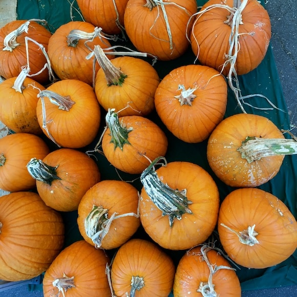 Pumpkins at the farmers market
