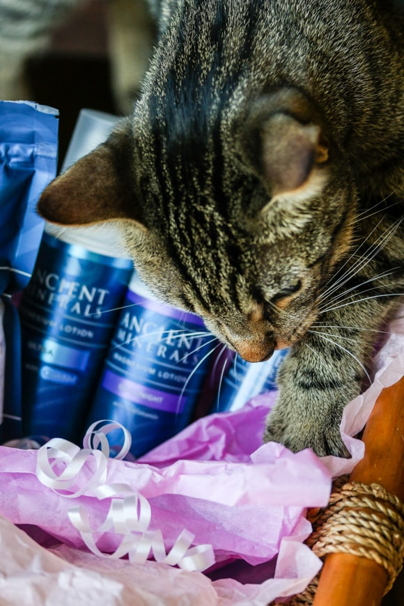 Ancient Minerals magnesium products with cat