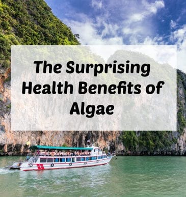 Podcast #18: Health Benefits of Algae with Catharine Arnston
