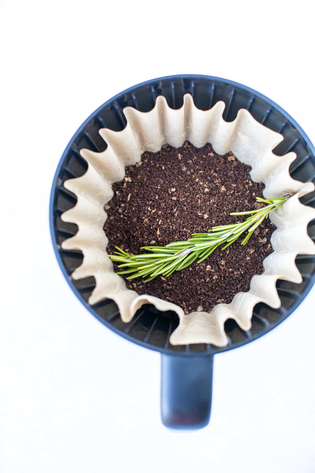 coffee filter with a sprig of fresh rosemary on top of coffee grounds
