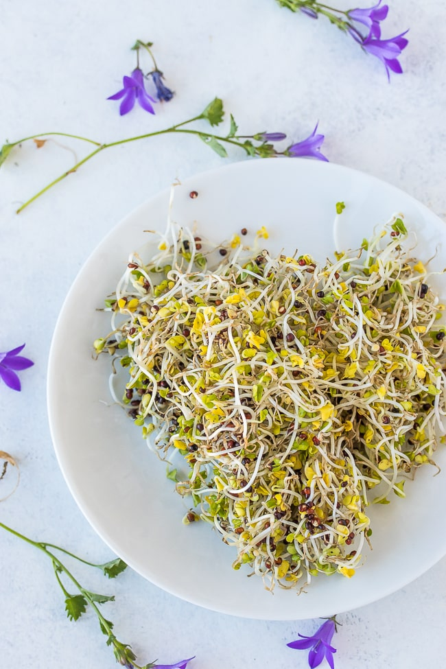 brocolli sprouts on a white plate with purple flowers around