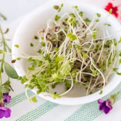 fresh broccoli sprouts served in a white bowl