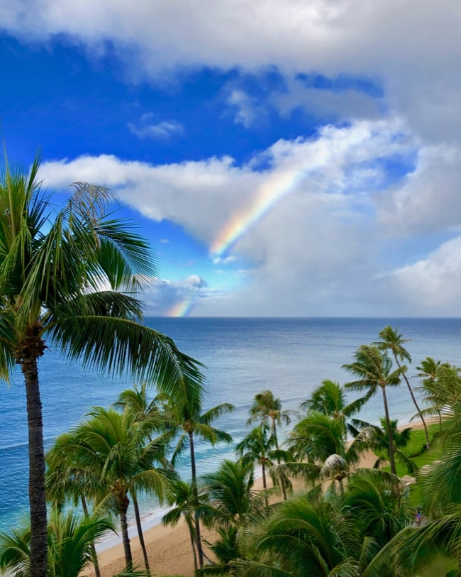 maui rainbow and palm trees