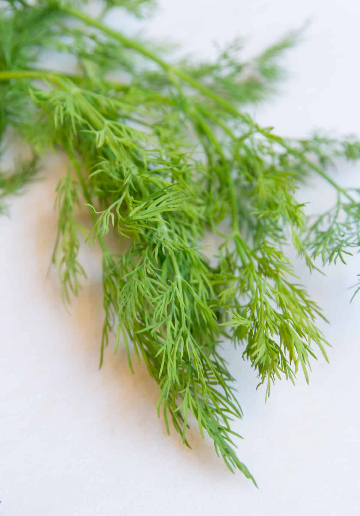 fresh dill for chicken salad