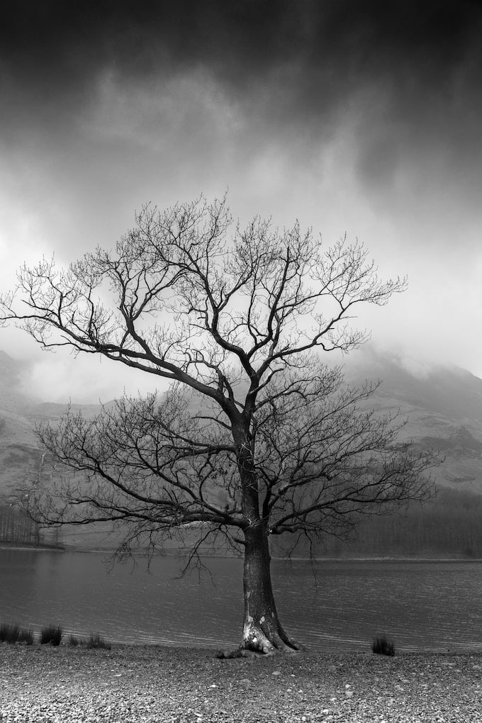 sad tree in winter