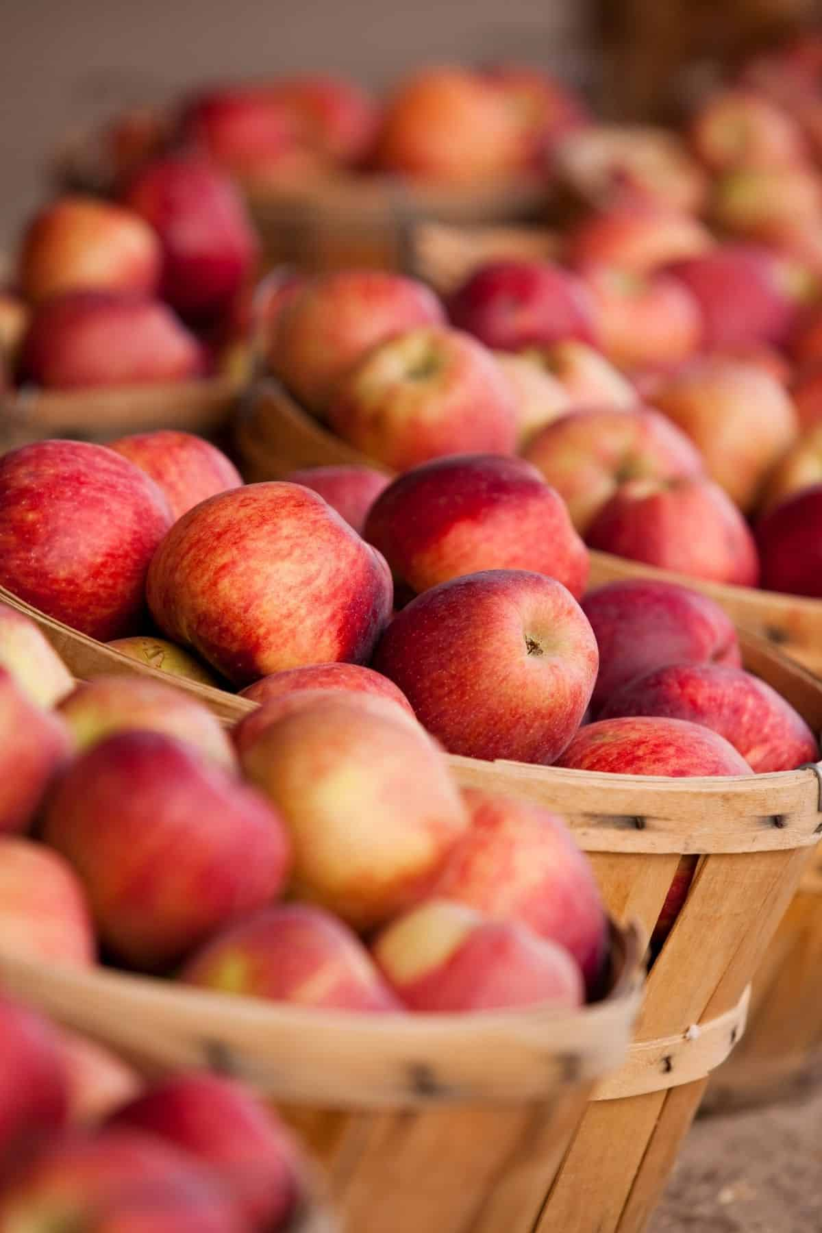 bushels of apples for sale