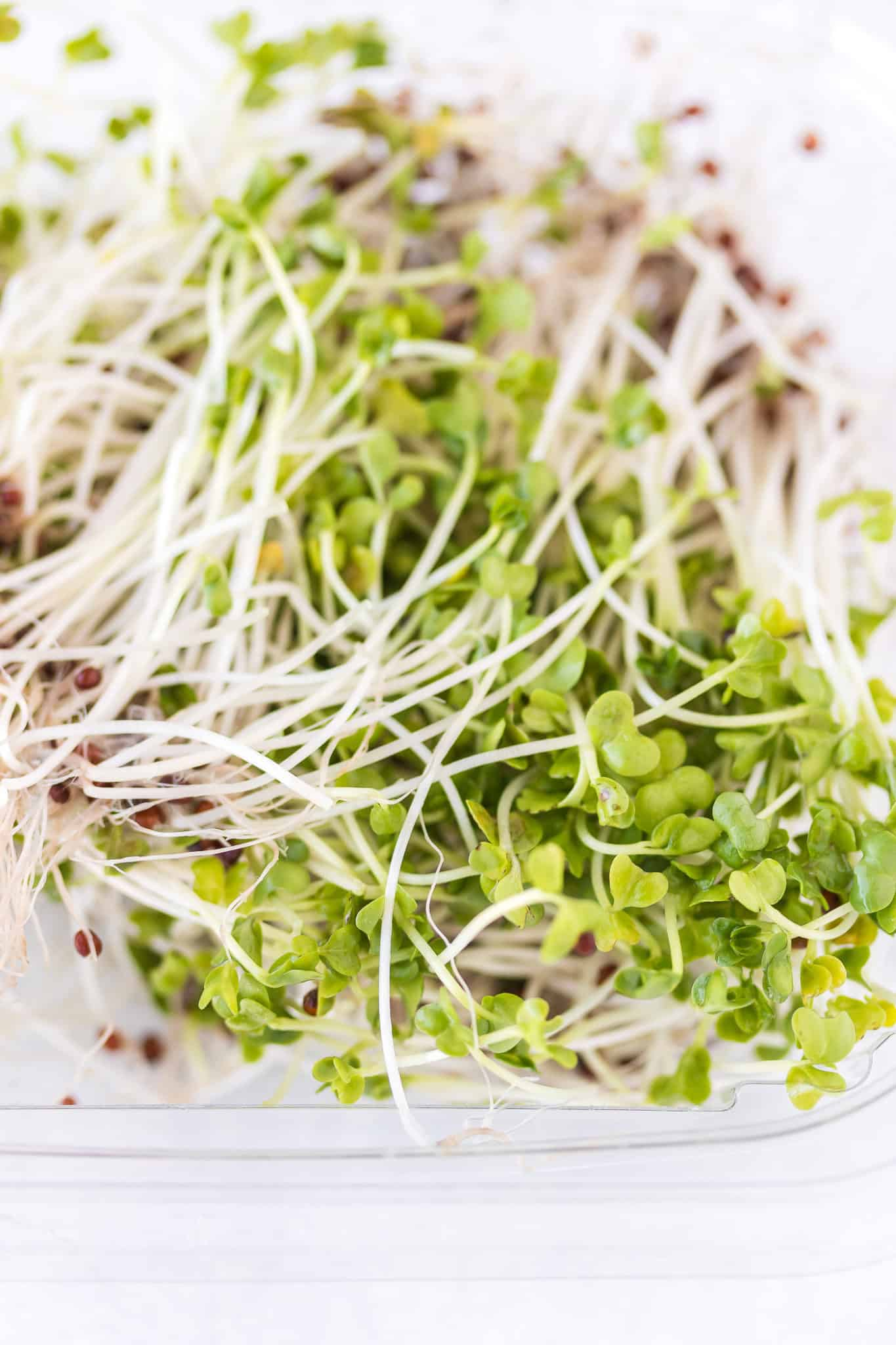 broccoli sprouts on a table