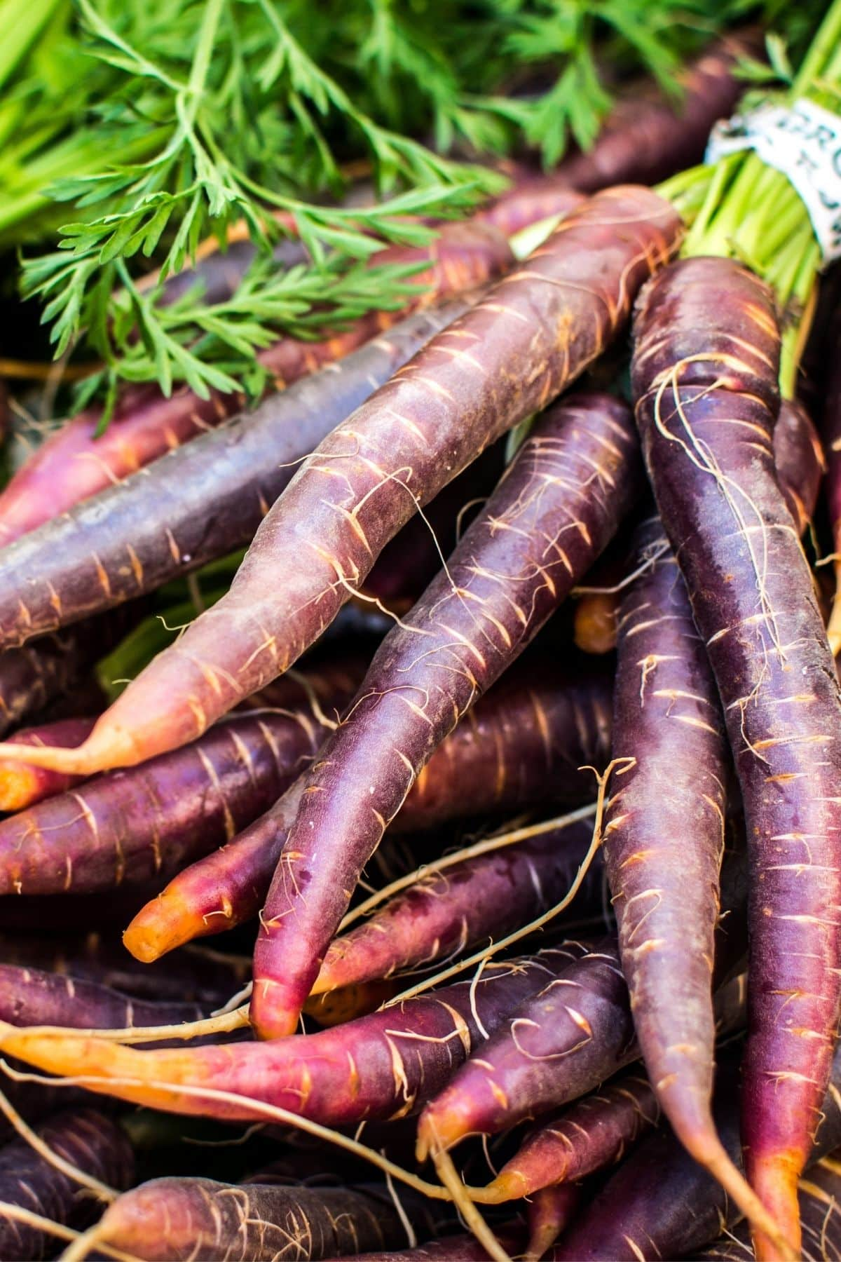 a bunch of purple carrots