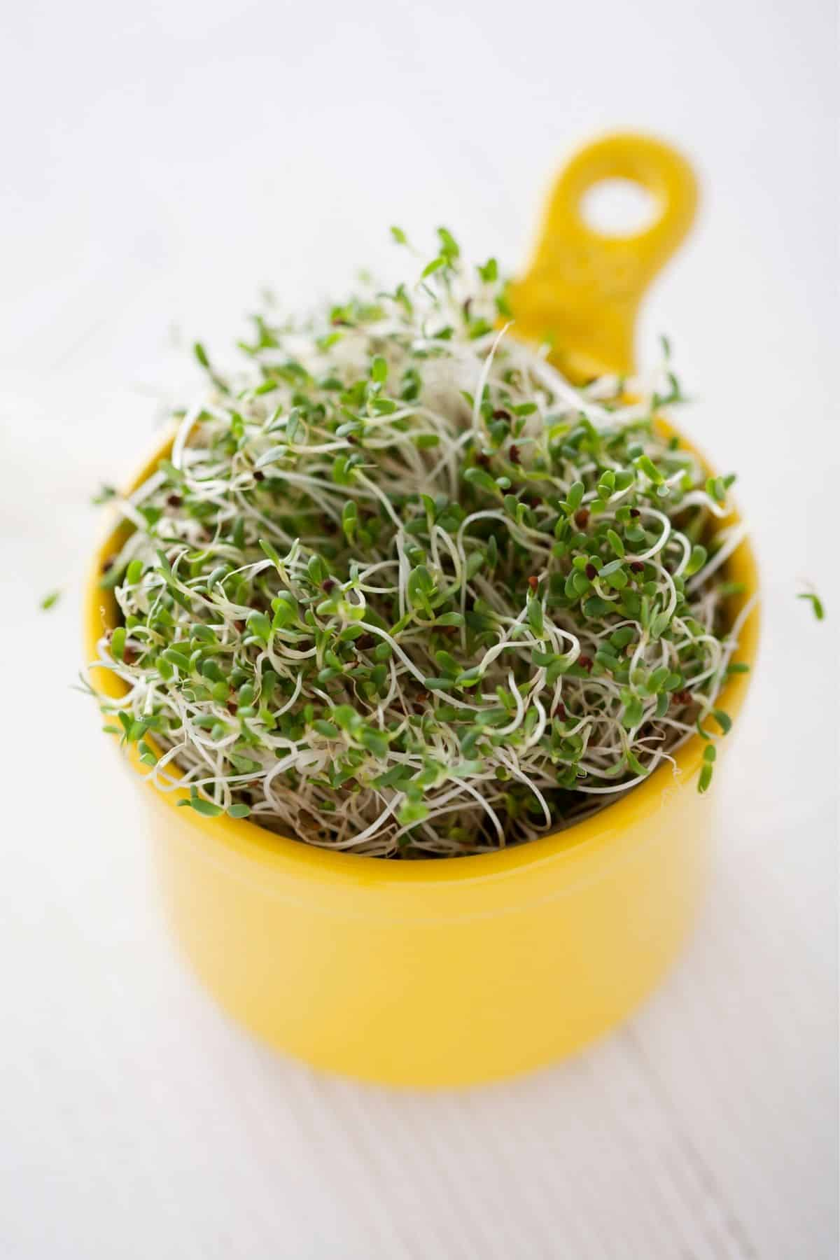 cup of broccoli sprouts